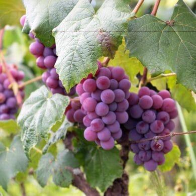 Prasy do owoców – jak wybrać, które kupić