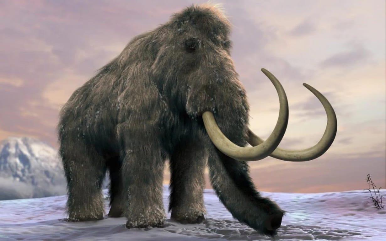 mamuty włochate
